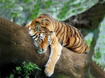 Tiger-Trail-Itinerary-Main-Regional-Tours-India1